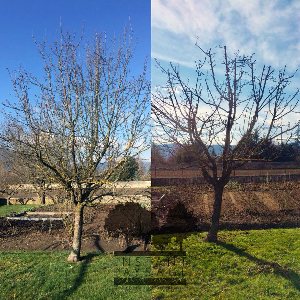 Taille arbre fruitier - ©Instant Paysage
