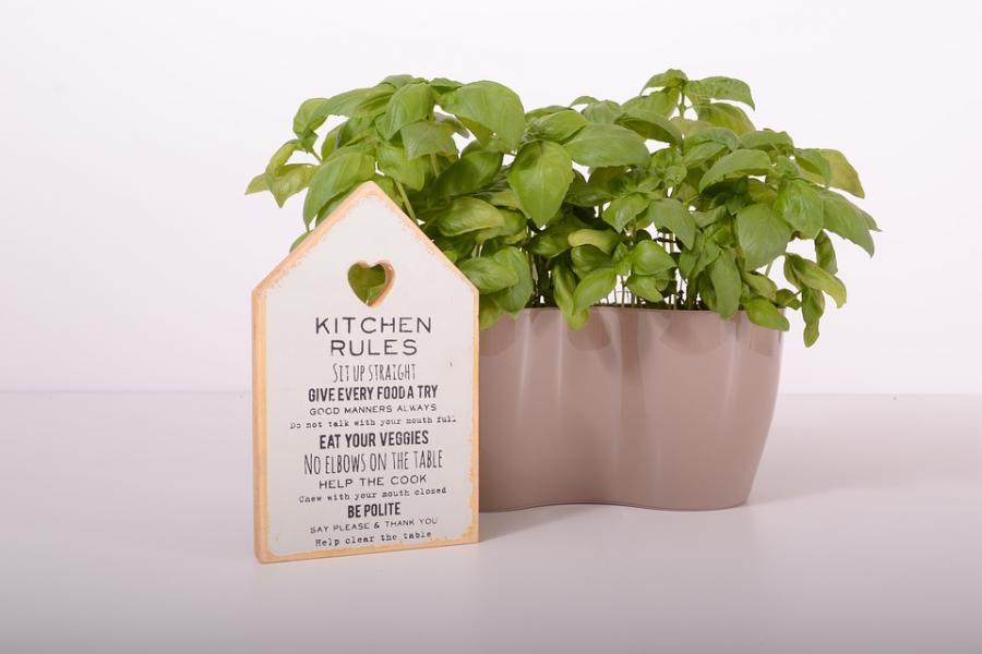 Plante cuisine
